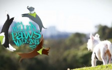million paws walk logo with dog in foreground at homebush bay - sydney olympic park